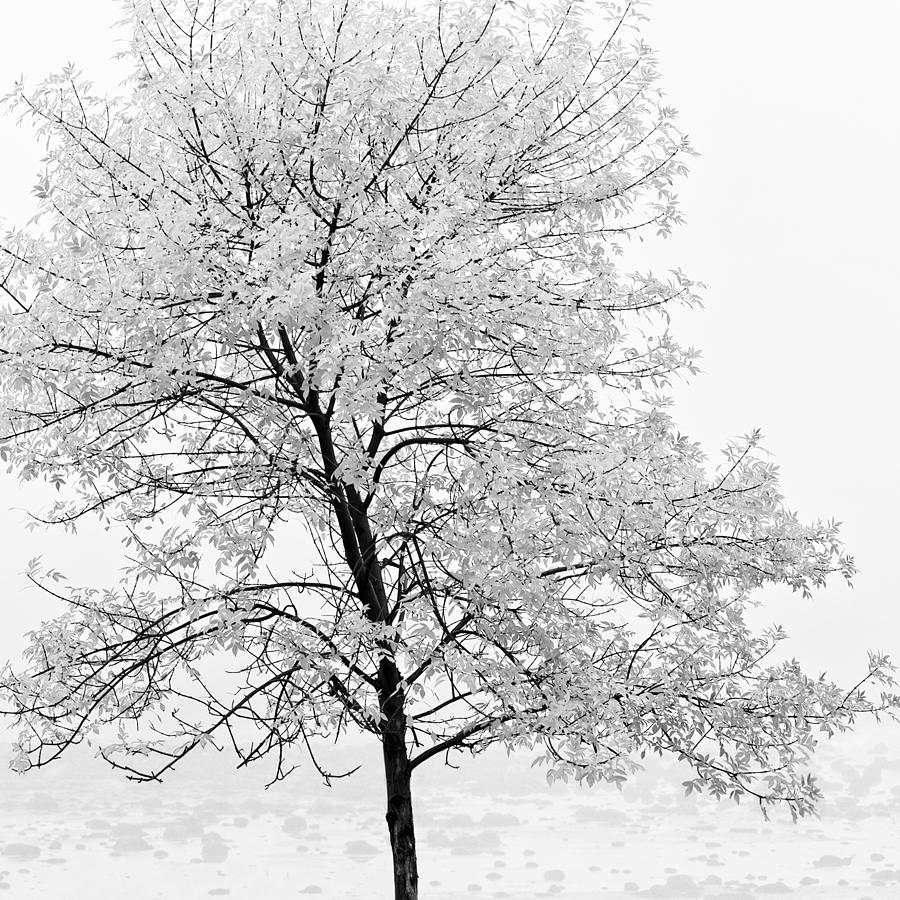 Autumn Photograph - Black And White Square Tree  by U Schade