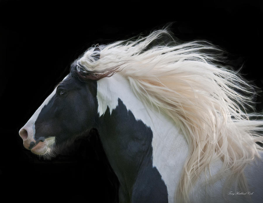 Equine Photograph - Black And White Study IIi by Terry Kirkland Cook