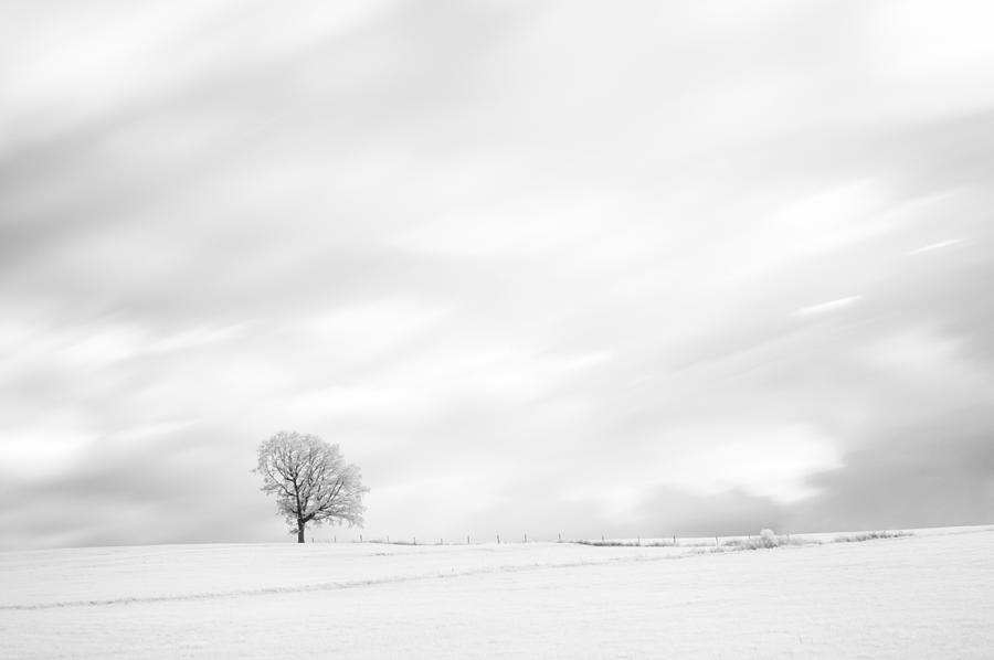 Autumn Photograph - Black And White Tree  by U Schade
