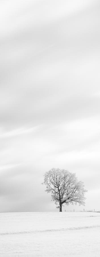 Autumn Photograph - Black And White Triptych Tree 13-0747 Set 1 Of 3 by U Schade