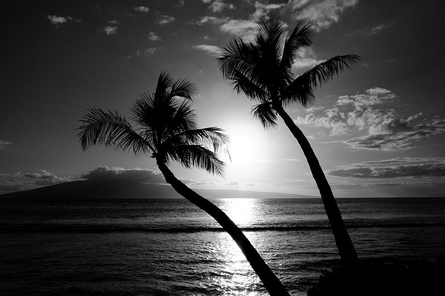 Palm Trees Photograph - Black And White Tropical by Pierre Leclerc Photography