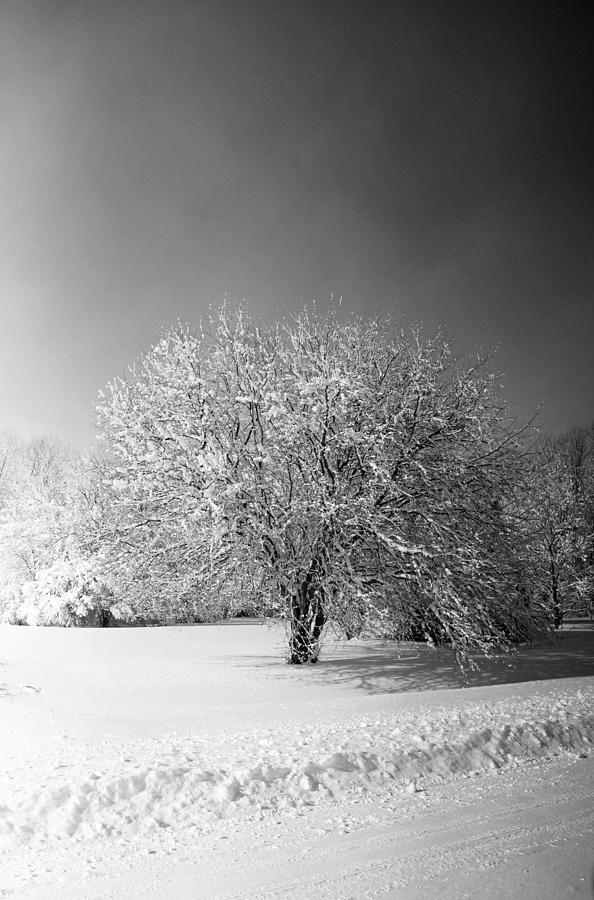 Winter Photograph - Black And White Winter by Thomas Fouch