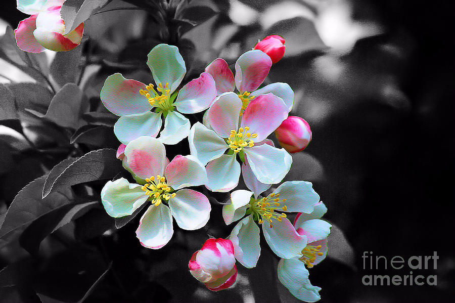 Blossom Photograph - Black And White With Color. No.2 by RL Clough