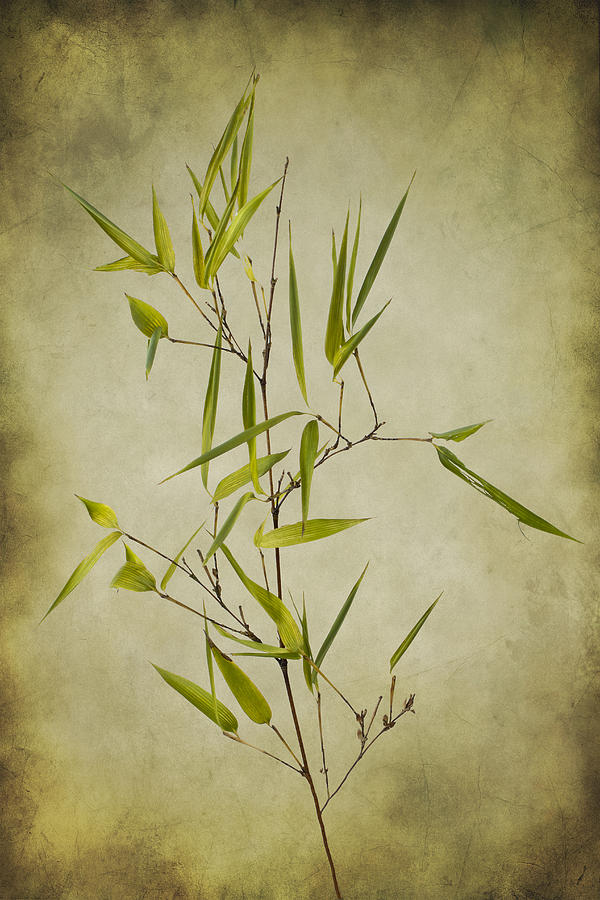 Black Photograph - Black Bamboo Stem. by Clare Bambers