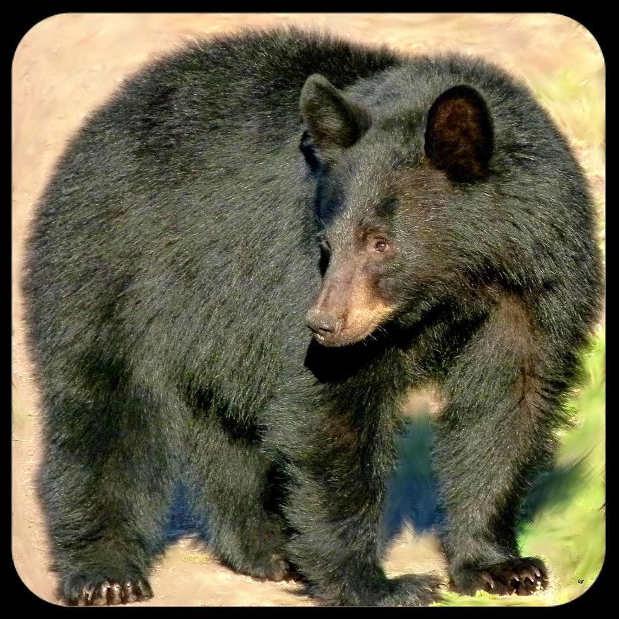 Black Bear Photograph - Black Bear 3 by Will Borden