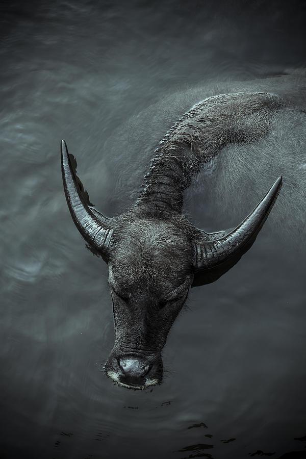 Black Photograph - Black Buffalo by Soren Egeberg