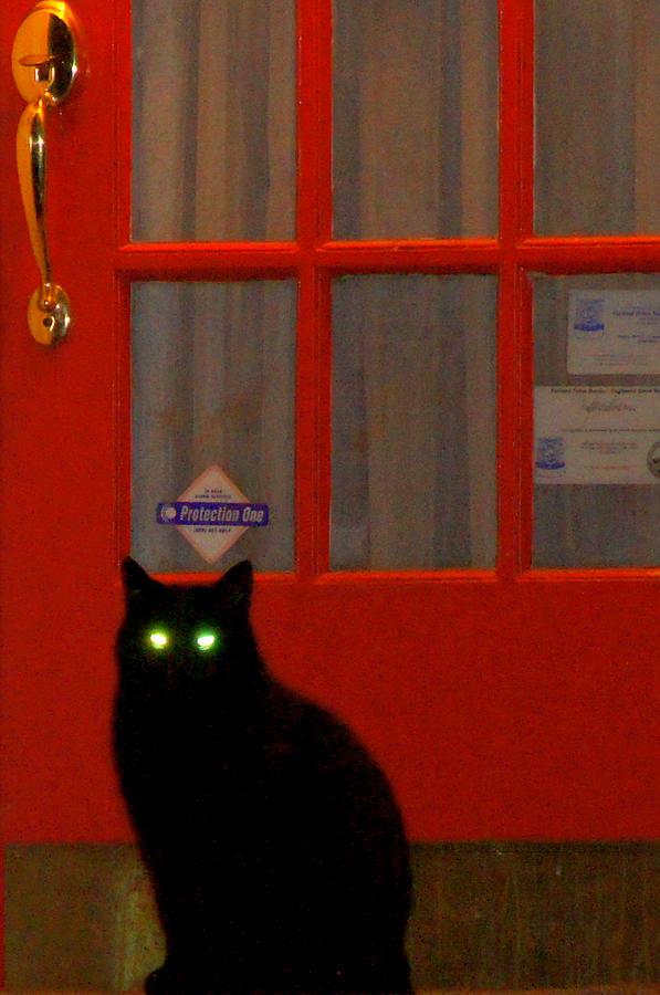 Cat Photograph - Black Cat Red Door by DerekTXFactor Creative