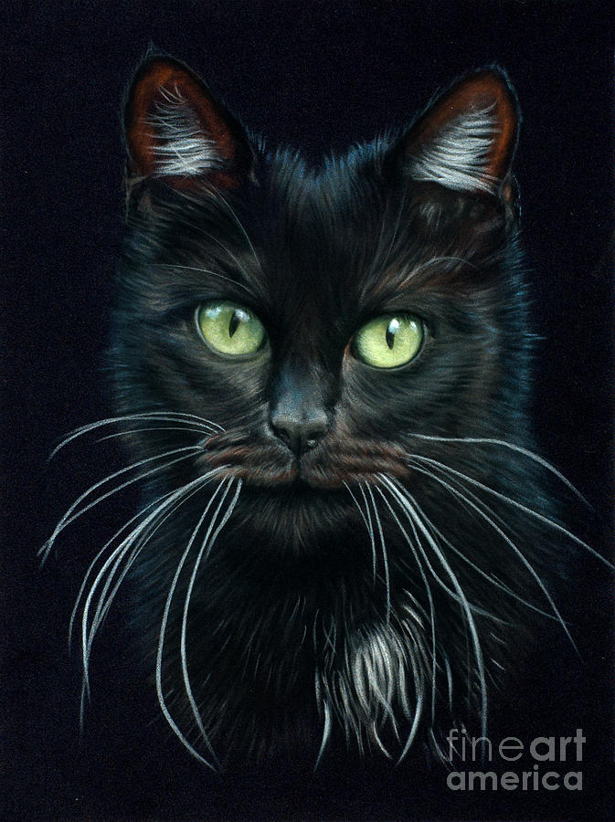 Cat Drawing - Black Cat by Tobiasz Stefaniak