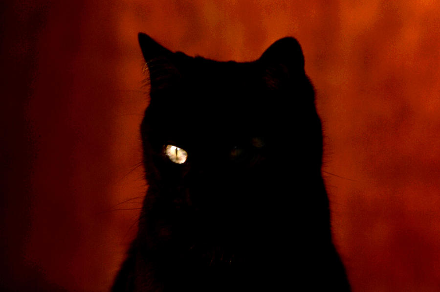 Black Cat - Yellow Eye Photograph by Robert  Rodvik
