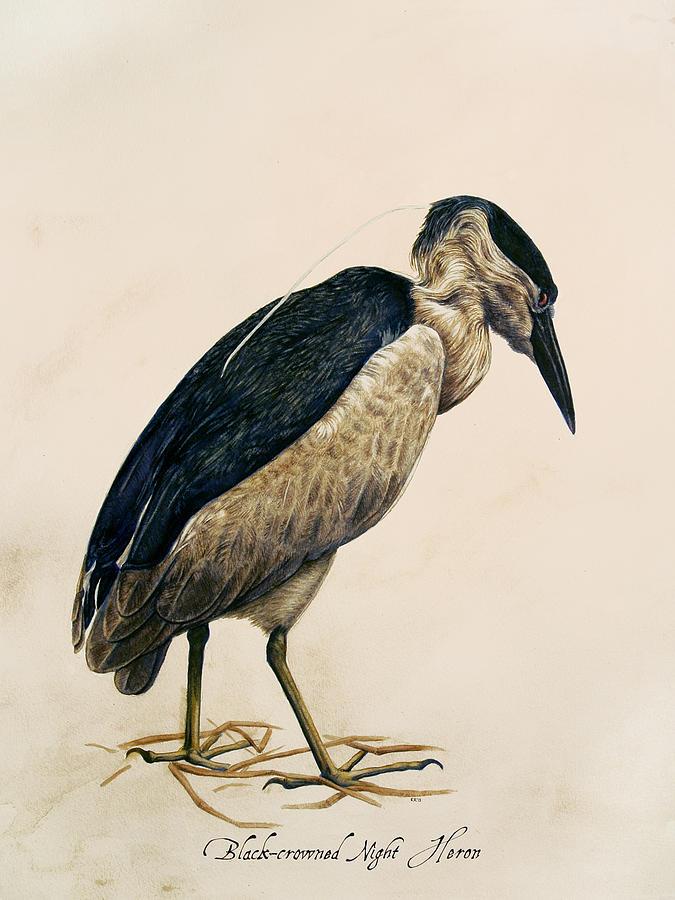 Bird Painting - Black-crowned Night Heron by Rachel Root