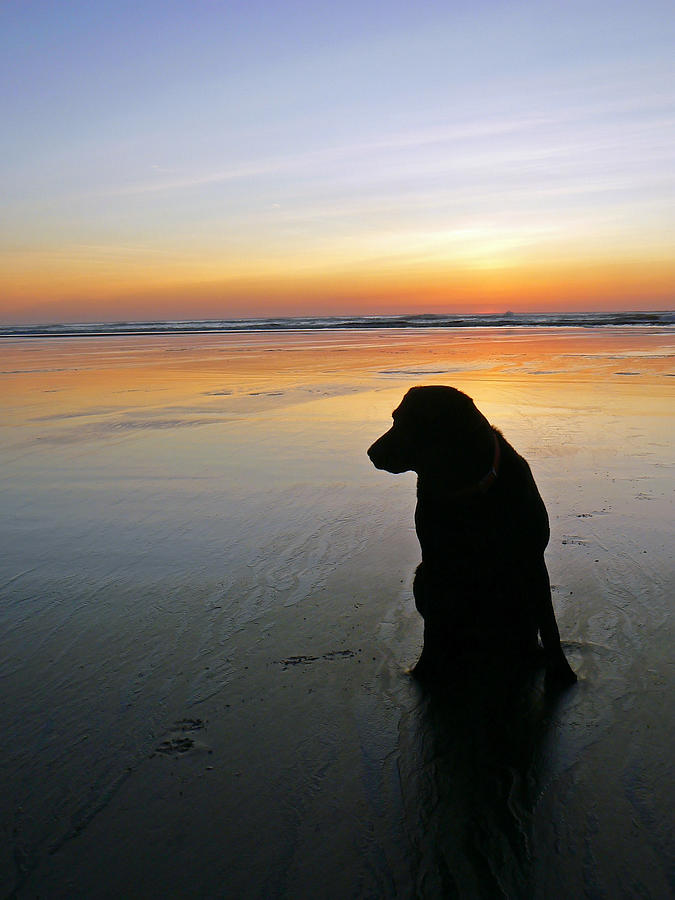 Black Photograph - Black Dog Sundown by Pamela Patch