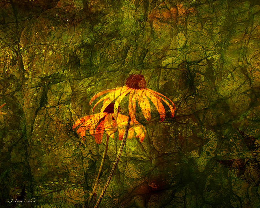 Walker Photograph - Black-eyed Susan Abstract by J Larry Walker