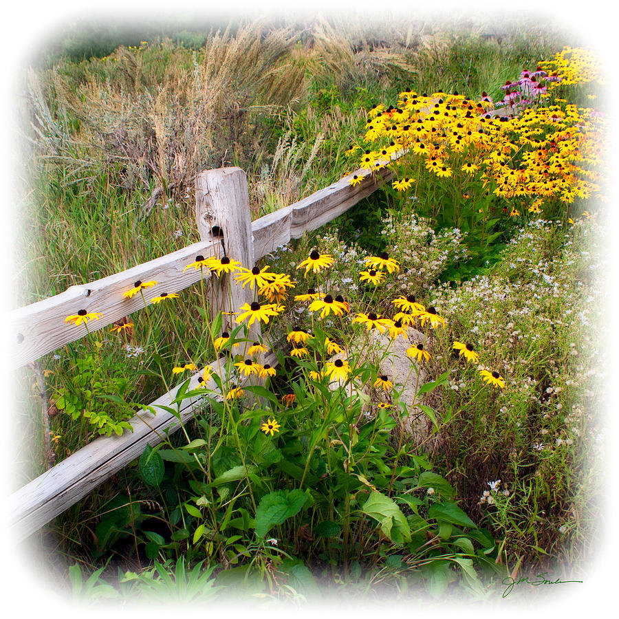 Black Eyed Susan Photograph   Black Eyed Susan Flowers Near Rustic Garden  Fence By Julie Magers