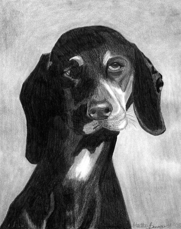 Black Forest Hound Dog Portrait  Drawing by Olde Time  Mercantile