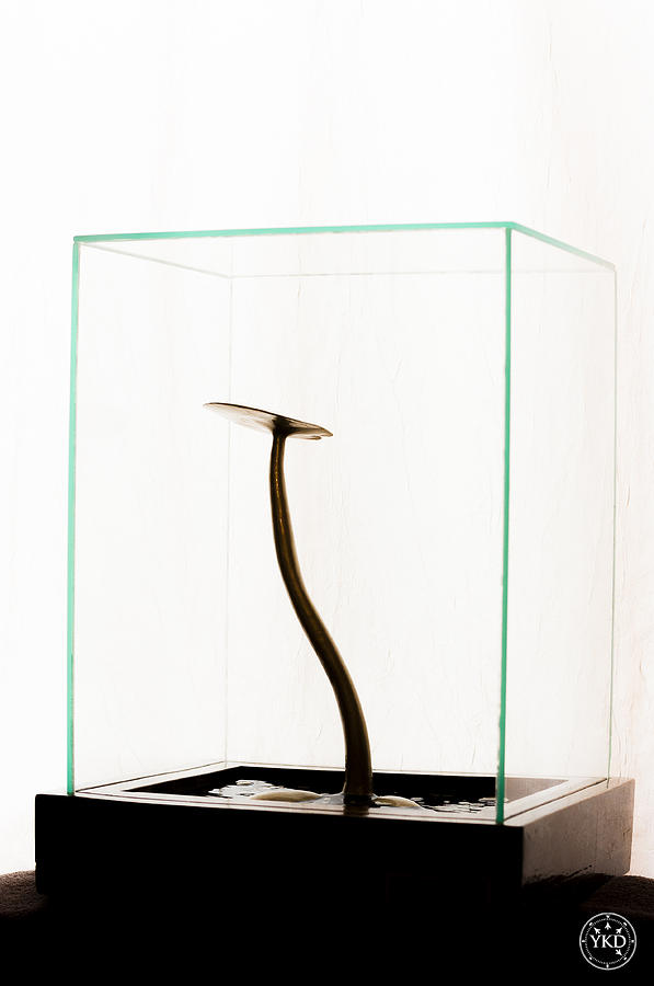Design Sculpture - Black Gold Lily by Yevgeni Kacnelson