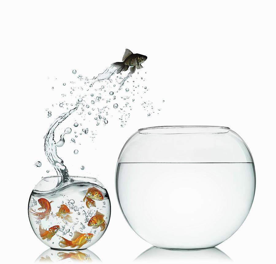 Black Goldfish Photograph by Gandee Vasan