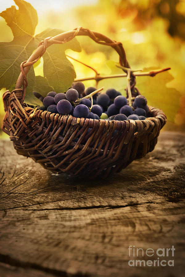 Crop Photograph - Black Grapes by Mythja  Photography