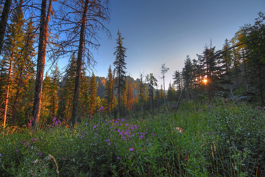 Black Hills Meadow Photograph