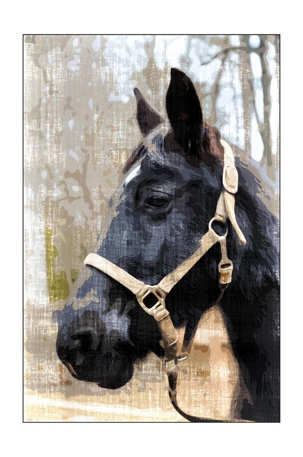 Animal Photograph - Black Horse by Susan Leggett