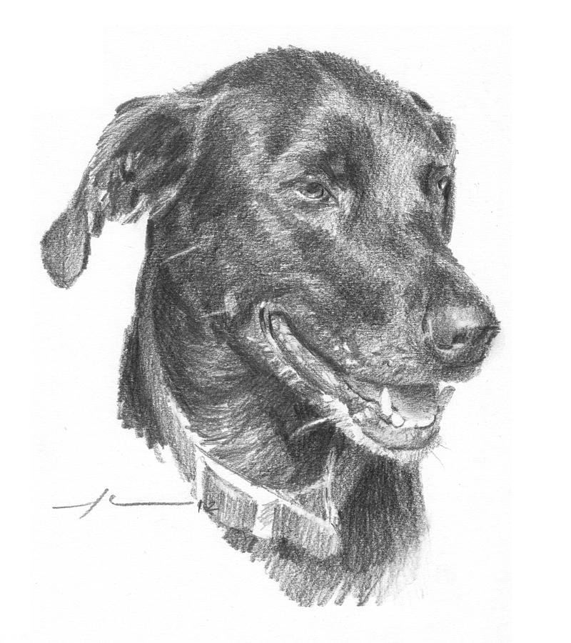 Black Lab Pencil Portrait Drawing by Mike Theuer