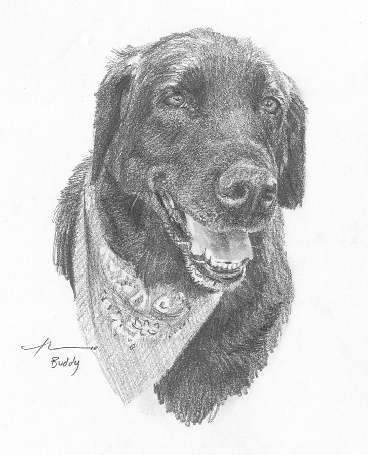 Black Lab With Bandana Pencil Portrait Drawing by Mike Theuer