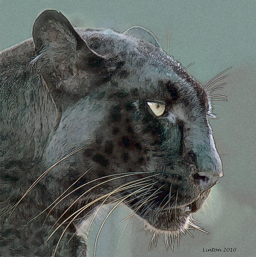 Leopard Digital Art - Black Panther by Larry Linton