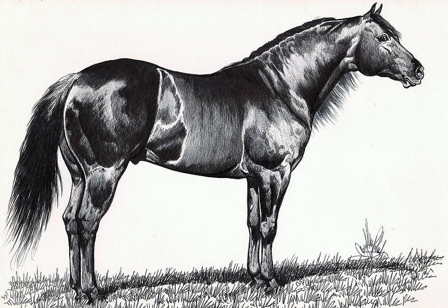 Black Quarter Horse Drawing by Cheryl Poland