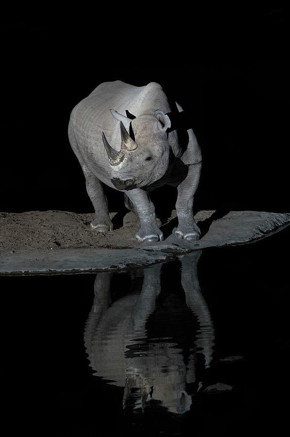 Africa Photograph - Black Rhinoceros At Night by Tony Camacho/science Photo Library