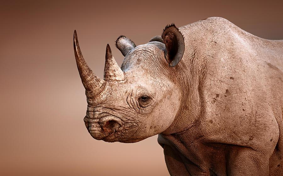 Black Rhinoceros Portrait Photograph