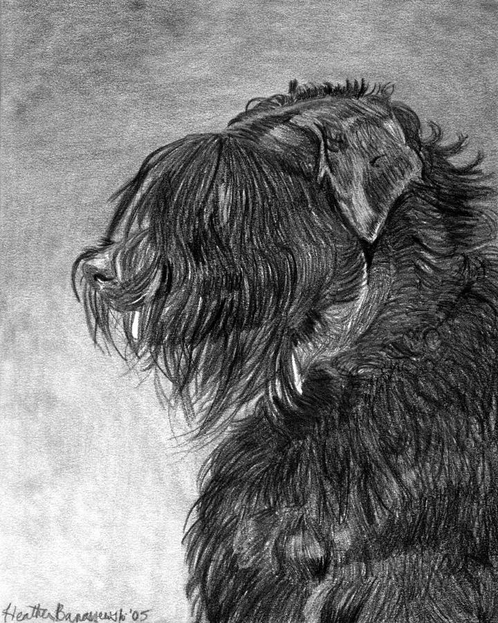 Black Russian Terrier Dog Portrait  Drawing by Olde Time  Mercantile