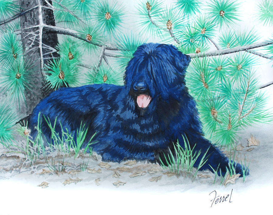 Dog Painting - Black Russian Terrier by Ferrel Cordle