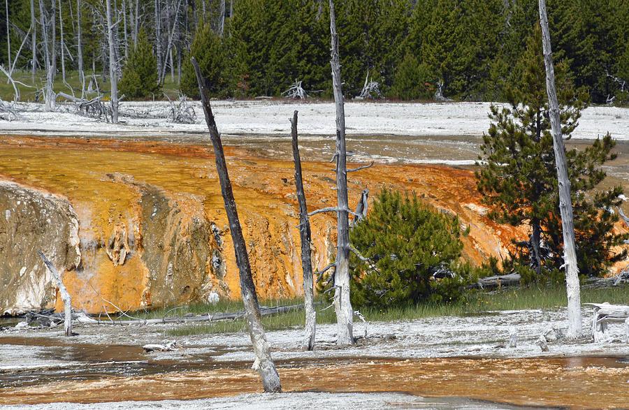 Yellowstone Photograph - Black Sand Basin Therma Runoff Yellowstone by Bruce Gourley