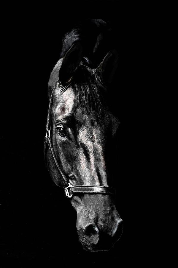 Horse Photograph - Black Satin by Nadine Lewis