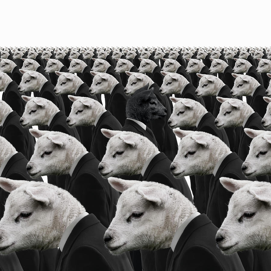Black Sheep Amongst White Sheep Photograph By Andrew Bret Wallis