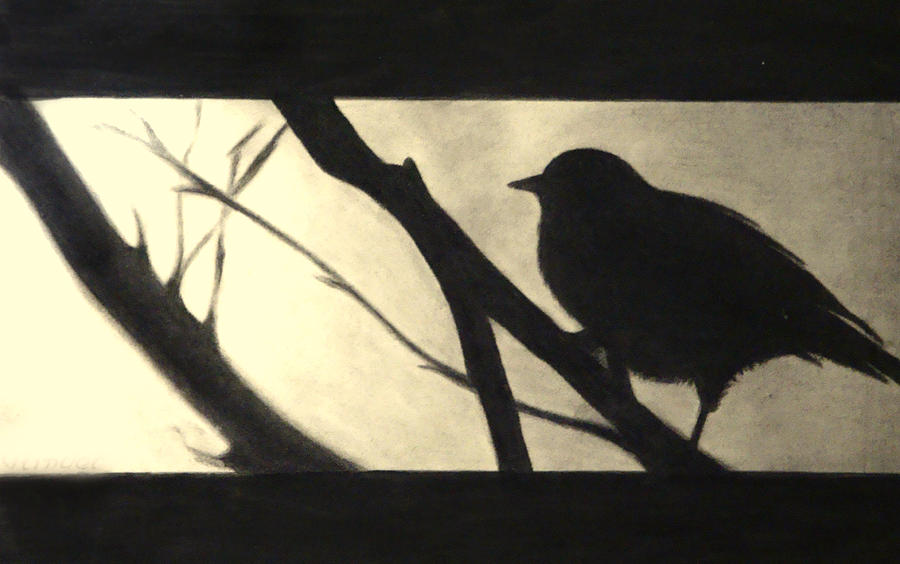 Bird Drawing - Black Side Beauty by Atinderpal Singh