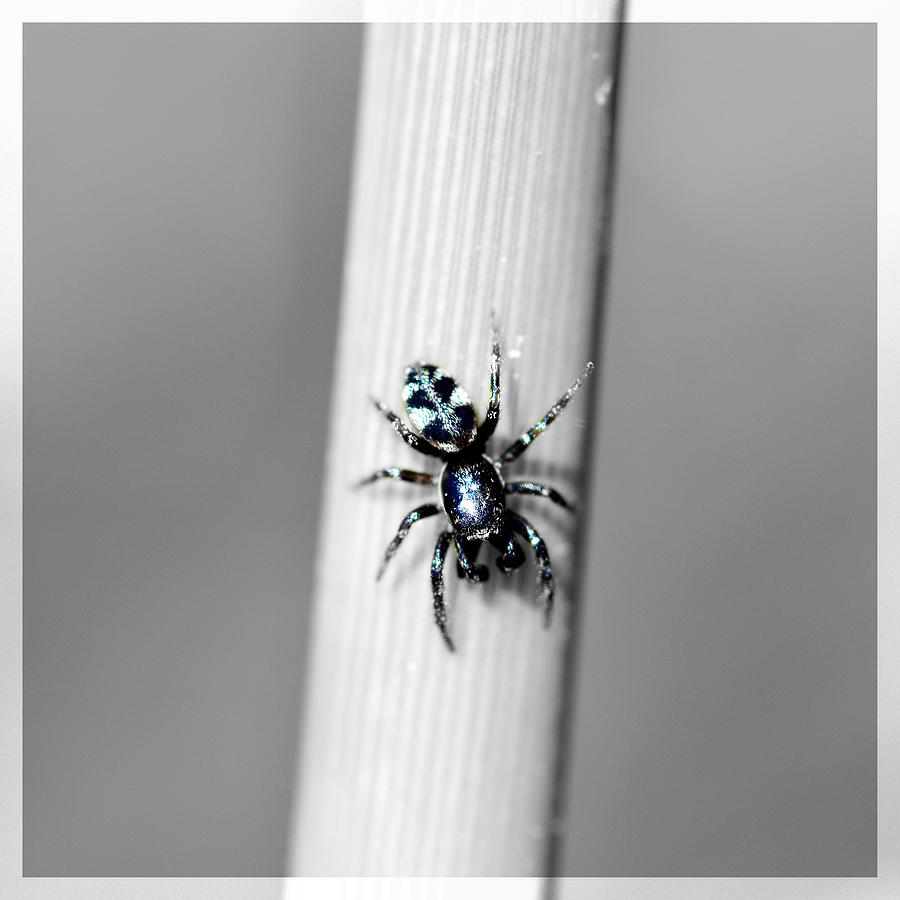 Above Mixed Media - Black Spider In Black And White by Tommytechno Sweden
