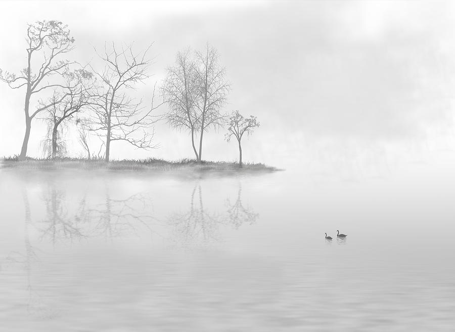 White Photograph - Black Swans Swimming In A Lake by Bijan Studio