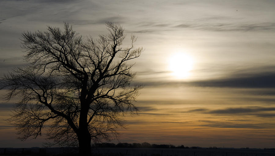 Black Tree At Sunrise Photograph by Dan  Meylor