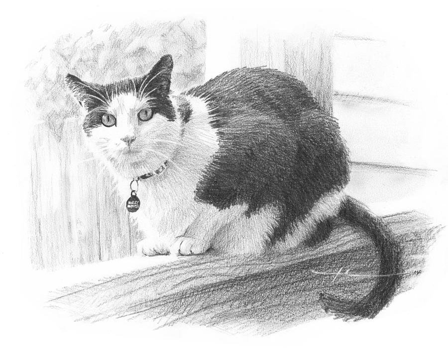 Black White Cat Pencil Portrait Drawing by Mike Theuer