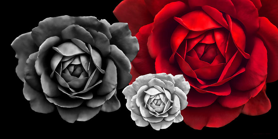 Rose photograph black white red roses abstract by jennie marie schell