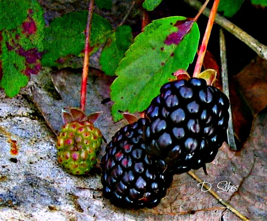 Green Photograph - Blackberries by Debbie Sikes