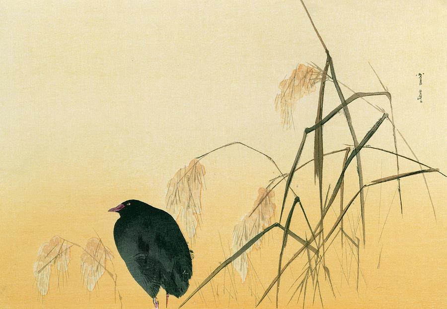 Japanese Painting - Blackbird by Japanese School