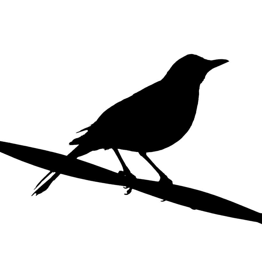 Blackbird Silhouette Photograph by Bishopston Fine Art