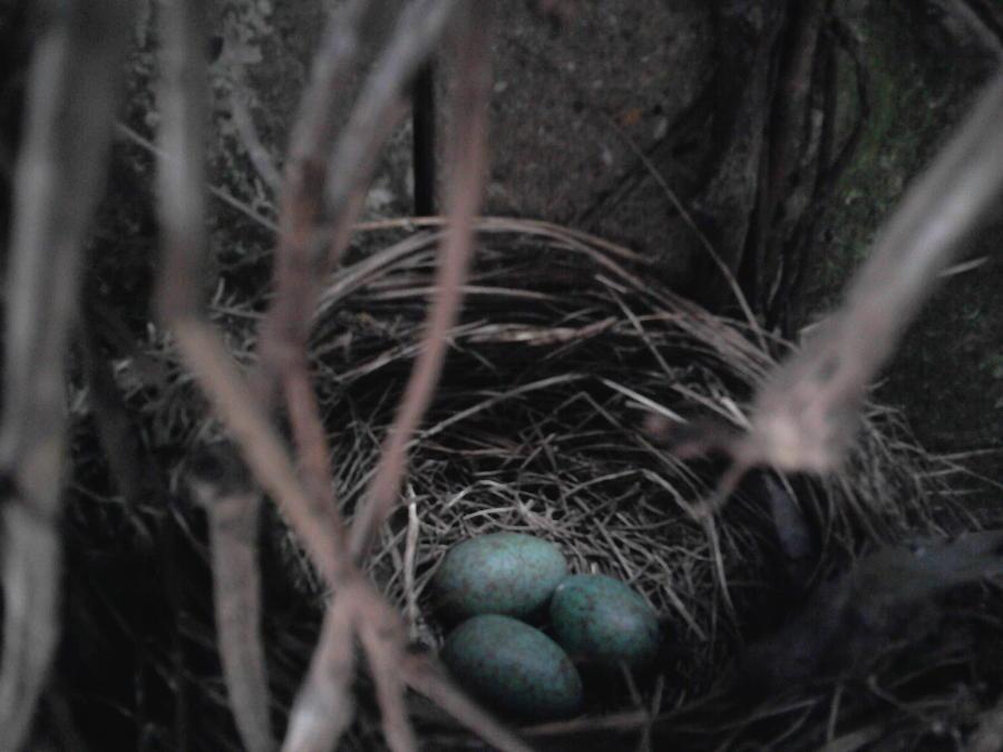Landscape Photograph - Blackbirds Nest by Geoff Cooper