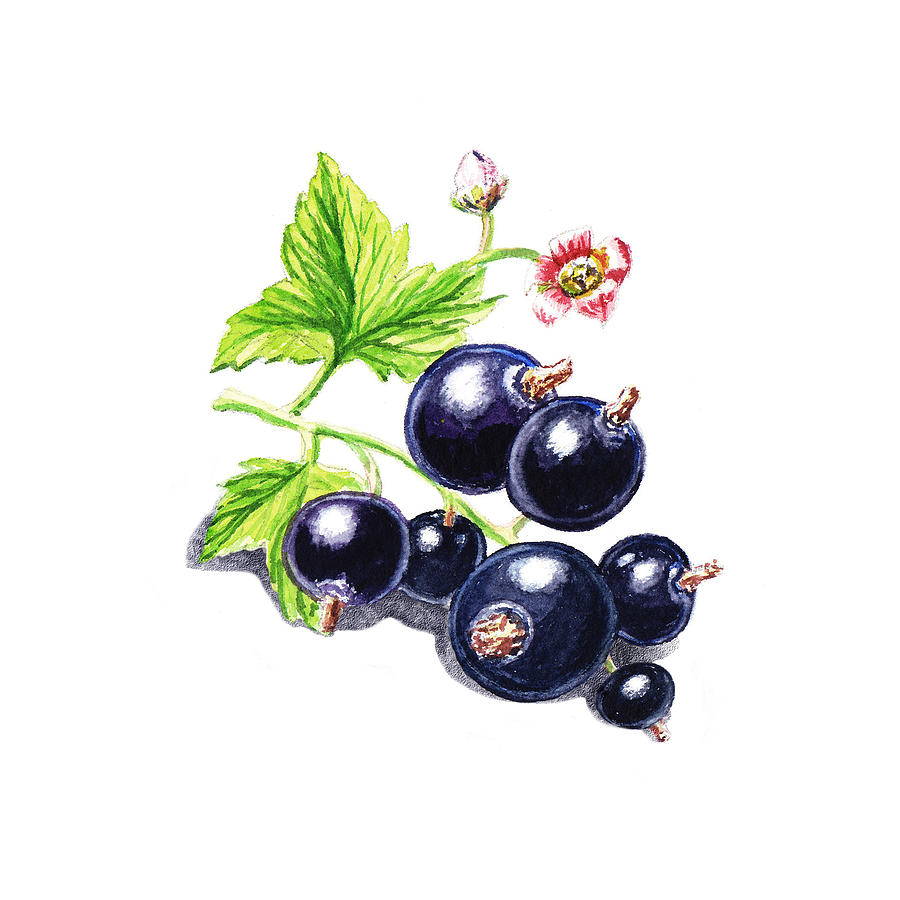 Blackcurrant New Design One Painting