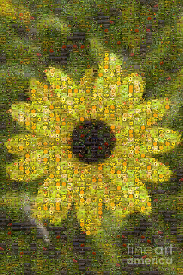 Flower Photograph - Blackeyed Suzy Mosaic by Darleen Stry
