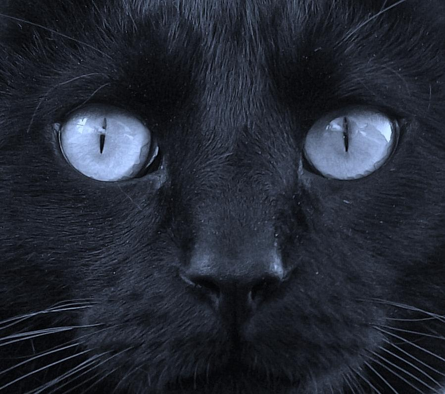 Blackie Photograph - Blackie Blue by Elizabeth Sullivan