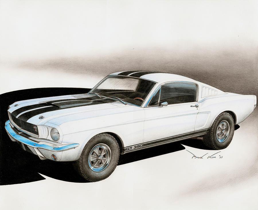 Blanco Shelby Drawing by Paul Kim