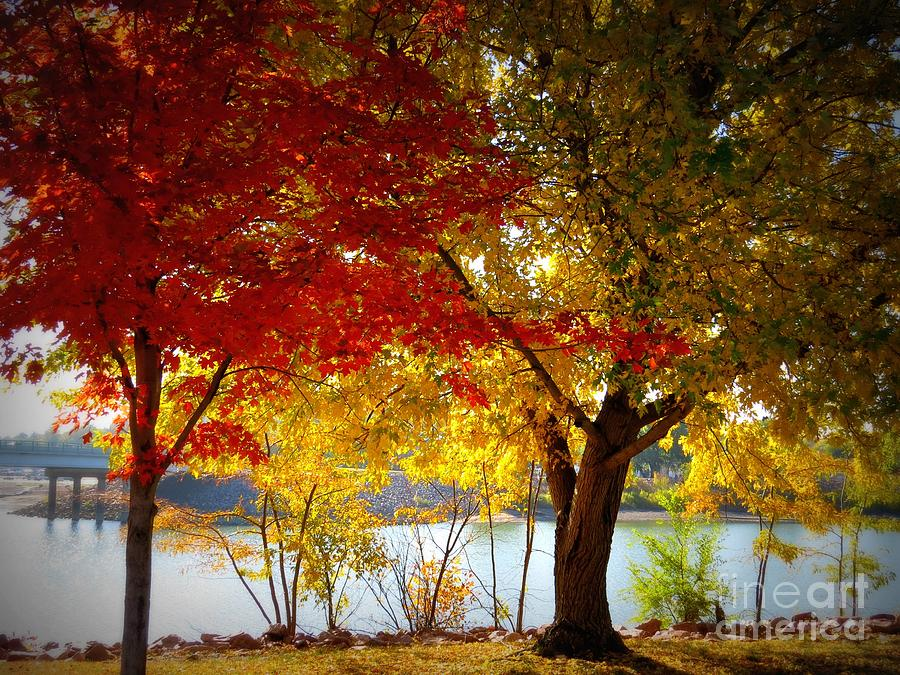 Fall Photograph - Blaze Of Color by Mary Willrodt