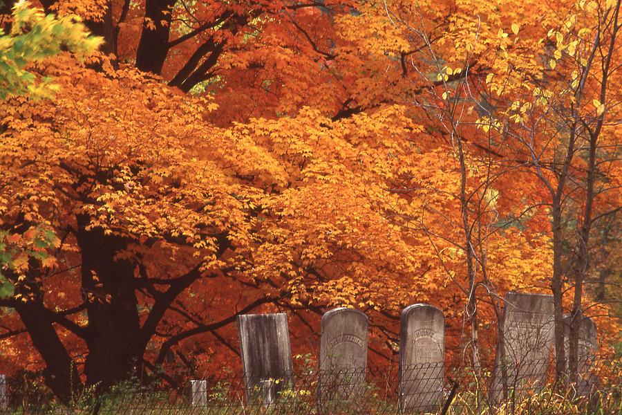 Fall Photograph - Blazing Autumn Oaks 2 by Roger Soule